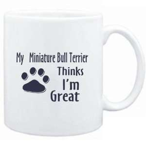 MY Miniature Bull Terrier THINKS I AM GREAT  Dogs