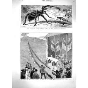 1880 Railway Mount Vesuvius Train Mouse Eating Spider